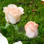Cake toppers Gum paste Peach rose