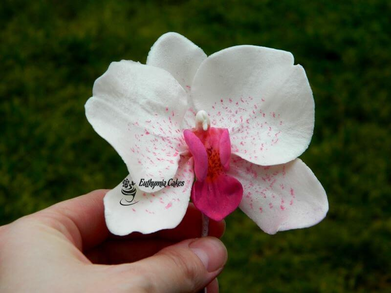 Cake toppers Gum paste Moth Orchid