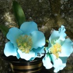 Cake toppers Sugar Meconopsis (Himalayan Poppy)